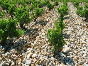 Chateauneuf-du-Pape Vineyard in French Wine Country