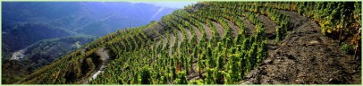 The vineyards of L'Ermita estate