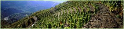 The vineyards of L'Ermita estate