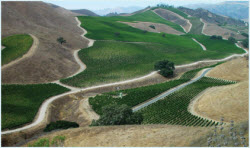Happy Canyon, Star Lane Vineyard
