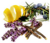 Botanicals in Gin