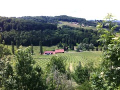 Vineyards of Steiermark (Styria)
