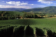 Yarra Valley - Wine Australia