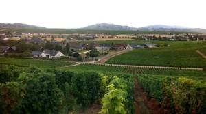 Vineyards in Verdigny Looking at Sancerre