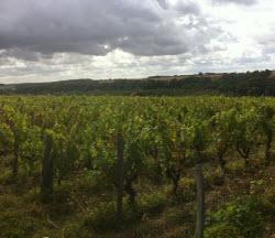 Coteaux du Loir vineyard