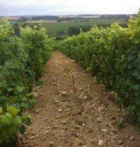 Limestone in Chinon