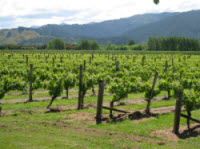 Wairau Valley vineyards