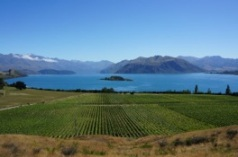 Stunning Rippon Vineyards, Central Otago