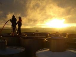 Torbreck - Pumping Over at Sunset