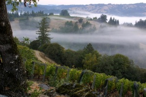 Courtesy of Flowers Vineyard & Winery, Sonoma Coast