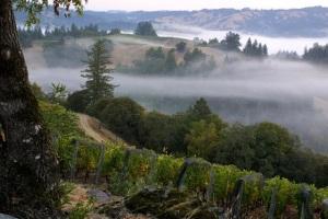 Courtesy of Flowers Vineyard & Winery, Sonoma Coast
