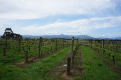 Yarra Valley Vineyards, Yering Station