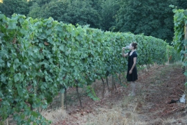 Treve drinking Pinot among the Pinot vines, Dundee Hills