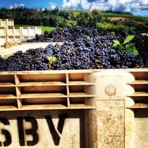 Pinot Noir coming in at Sokol Blosser Vineyards