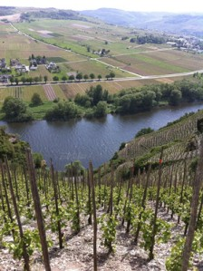 Looking down to the Mosel River from the Würzgarten