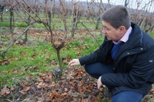 Pierre Gassmann In His Vines
