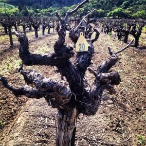 To Kalon Vineyard