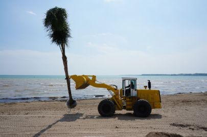 The Annual Palm tree planting at Port Dover Beach