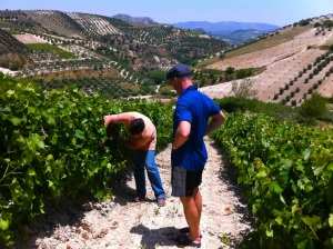 Nikos Douloufakis and John Szabo in vineyards, Dafnes, Crete