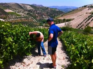 Nikos Douloufakis and John Szabo in vineyards, Dafnes, Crete