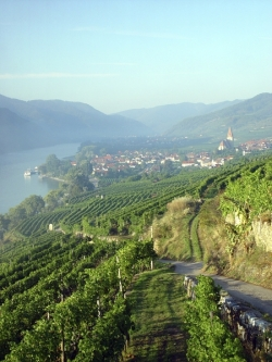 Near Weißenkirchen in the wine region Wachau in Niederösterreich (Lower Austria). View from single vineyard Achleiten towards west. © AWMB / Egon Mark