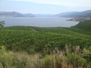 King Vineyard, Naramata Bench