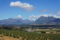 New Plantings In Paarl