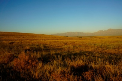 Swartland Landscape - the land that time forgot (or at least the 1990s wine industry boom)