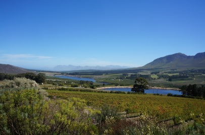 The Hemel-en-Aarde Valley with the Atlantic in the distance, seen from Newton Johnson Vineyards