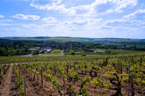Looking west onto Chablis from the top of Les Clos grand cru