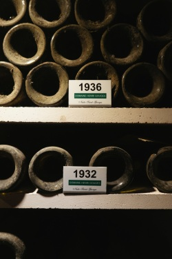 Old Vinetages at Domaine Henri Gouges, one of the First Domaines in the Côte d'Or to estate bottle wine