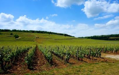 Priceless grand cru vineyards, Côte de Nuits
