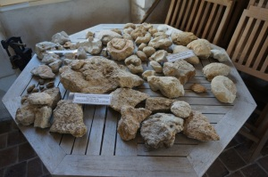 Rocks and fossils on display at Domaine Goisot