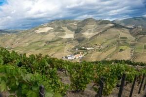 Vineyards in the Cima Corgo, Douro Valley-3428