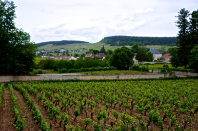 Vineyards of the Côte Chalonnaise