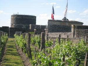 Chateau Angers Chenin vines