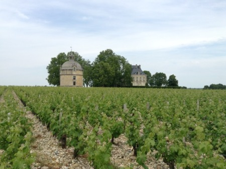 Château Latour pigeon house and vines