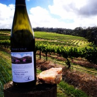 Drinking Contours Riesling in Contours Vineyard