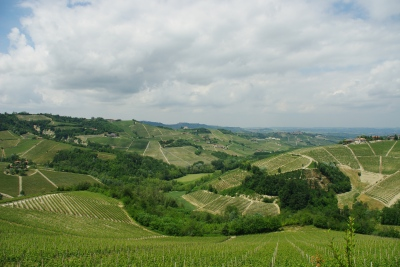 Hillsides filled with nebbiolo grapes in Barolo
