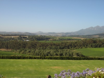The complex terrain of Stellenbosch creates many sub-appellations