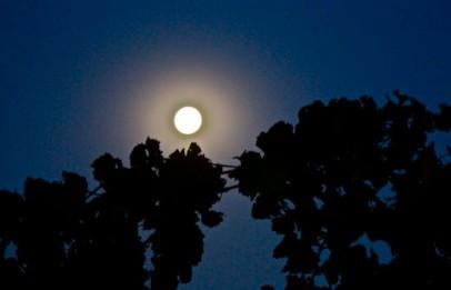 Pleine lune au-dessus d'un vignoble de Wolf Blass