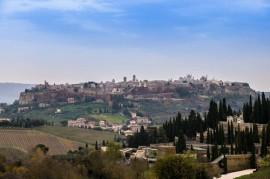 Hillside vineyards in Orvieto, Umbria, Italy