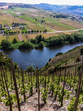 Ürziger Würzgarten, Mosel, looking at 3rd rate flatlands