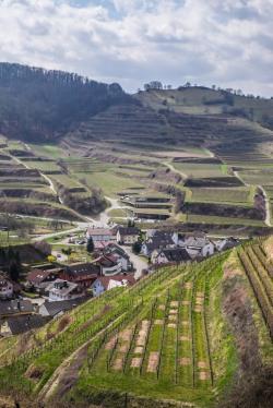 Vineyards in the Kaiserstuhl, Baden-9872