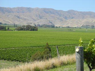 2 Marlborugh Brancott Valley,