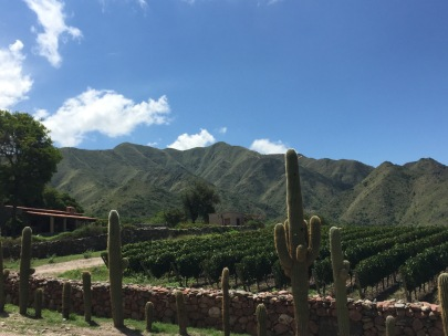 High desert vineyards of Salta