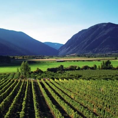 Orofino Vineyards
