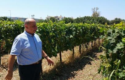 Athanassios Parparoussis and Moschato Vines, Domaine Parparoussis