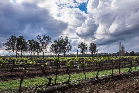 Braemore Vineyard