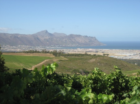 Coastal areas bring out the pinot in pinotage